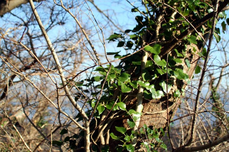 tree_in_ivy